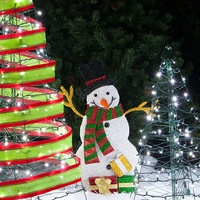 outdoor-christmas-trees.jpg