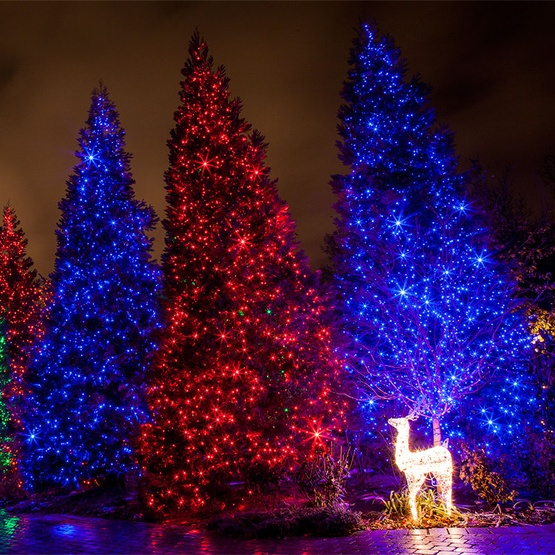 blue-outdoor-christmas-lights.jpg