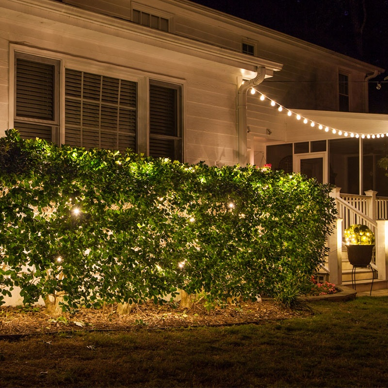 String Lights Pushed into Bushes to Create an Inviting Glow from Within