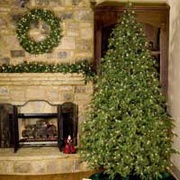 trutip christmas trees