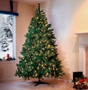 christmas tree - cumberland fir