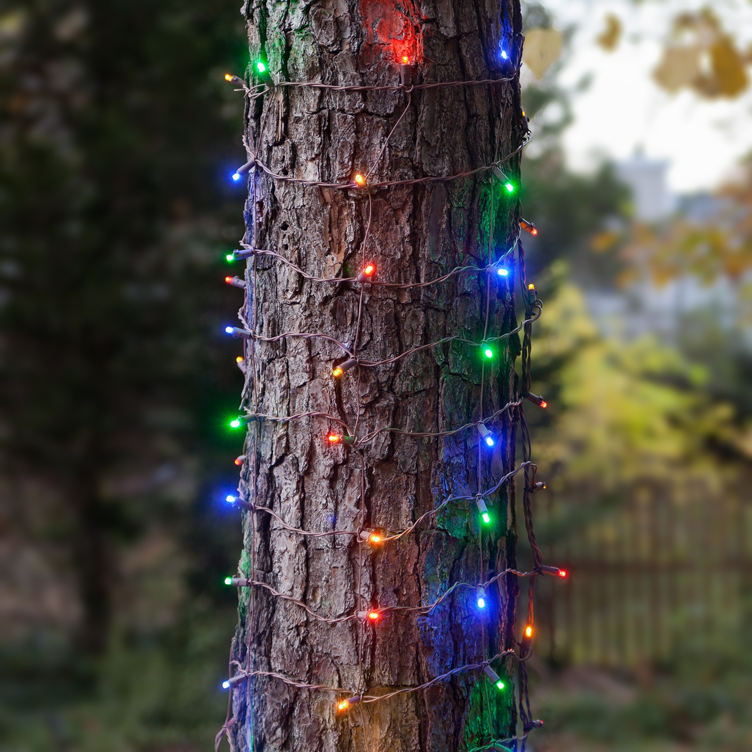 Tree Trunk Christmas Lights