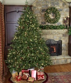 6.5' Full Pre-Lit Colorado Pine Tree, 550 Clear Lights