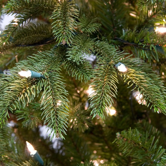 7.5' Fraser Fir LED Tree - 750 Multicolored Bulbs