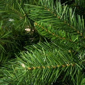 Dunhill Fir Prelit Tree