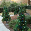 2' Walkway Pre-Lit Winchester Fir Tree, 50 Multicolored LED Lamps
