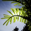 18' LED Palm Tree - Natural Green