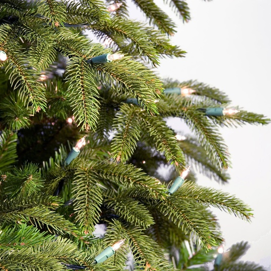 Fraser Fir Unlit Tree