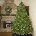 6.5' Full Pre-Lit Winchester Fir Tree, 800 Clear Lamps