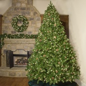4.5' Full Pre-Lit Winchester Fir Tree, 300 Clear Lamps