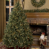 7.5' Slender Douglas Fir Tree, 600 Multicolored Lamps