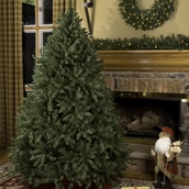 8.5' Full Douglas Fir Tree, Unlit