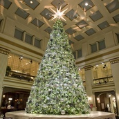 35' Giant Everest Commercial Christmas Tree, C7 Warm White LED Lights