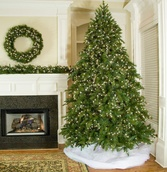 9.5' Slender Pre-Lit Brighton Fir Tree, 1100 Clear Lamps