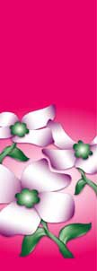 "Dogwood Flowers on Pink Background Light Pole Banner 30"" x 84"""