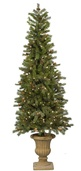 6' Potted Natural Pine Tree, 250 Clear Lamps
