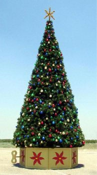 20' Rocky Mountain Pine Tree, Mini Clear Lights