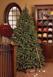 7.5' Slender Pre-Lit Sequoia Fir Tree, 750 Clear Lamps