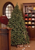 6.5' Full Pre-Lit Sequoia Fir Tree, 800 Clear Lamps