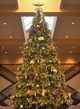 17' Full Pre-Lit Giant Everest Fir Tree, 888 C7 LED Multicolored Lamps