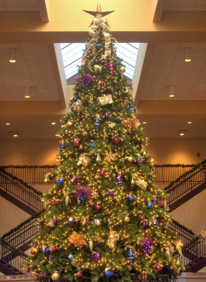 26' Full Pre-Lit Giant Everest Fir Tree, 2088 C7 LED Multicolored Lamps