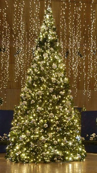 41' Giant Everest Commercial Christmas Tree, 5mm Warm White LED Lights