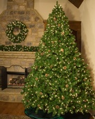 6.5' Full Pre-Lit Winchester Fir Tree, 800 Multicolored Lamps
