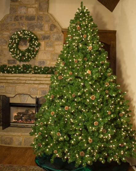 7.5' Slender Pre-Lit Winchester Fir Tree, 750 Multicolored Lamps