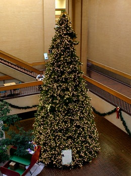 20' Giant Everest Commercial Christmas Tree, Mini Clear Lights