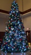 26' Full Pre-Lit Giant Everest Fir Tree, 2088 C7 5 Watt Multicolored Lamps