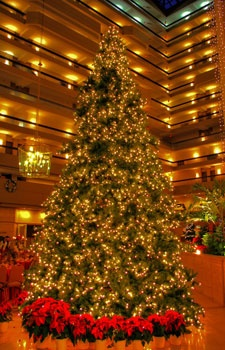 35' Giant Everest Commercial Christmas Tree, Mini Clear Lights
