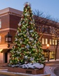 41' Giant Everest Commercial Christmas Tree, C7 Clear LED Lights