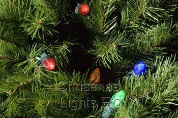 23' Giant Everest Commercial Christmas Tree, C7 Multicolor LED Lights