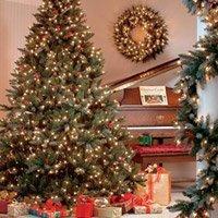 Menu All Christmas Trees