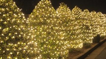 Putting lights on christmas trees wlrtradio wrapping trees with christmas lights aloadofball Image collections