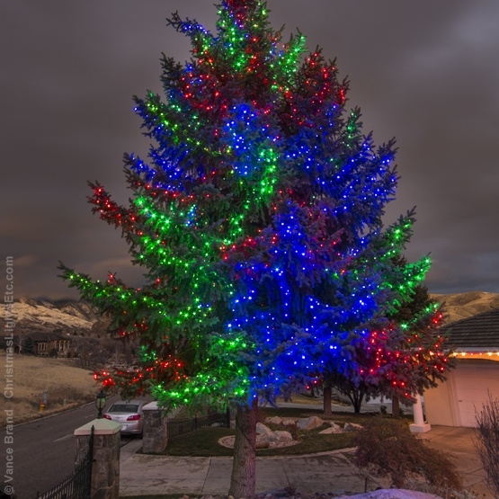 light wrapped evergreen trees
