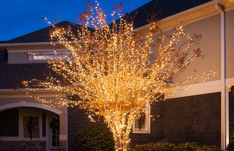 Outdoor Light Trees Christmas: Wrap an outdoor tree with Christmas lights, plus more yard decorating ideas.,Lighting