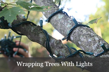Light Wrapped Christmas Trees. Decorating With Snowflake Lights