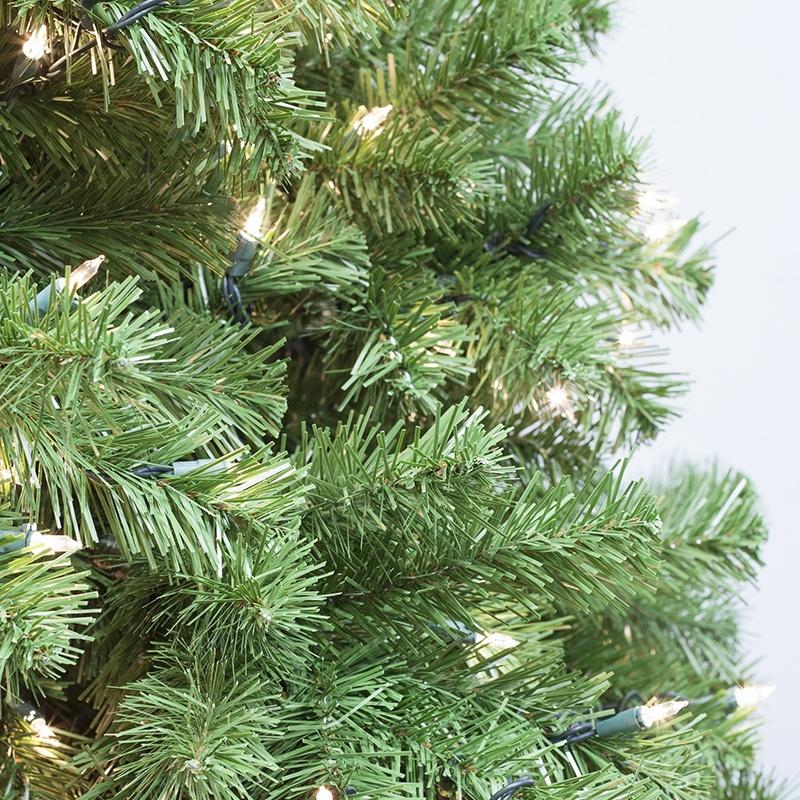 seqouia-tree-profile-5317.jpg