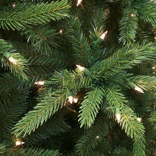 Balsam Fir Tree Tips Up Close