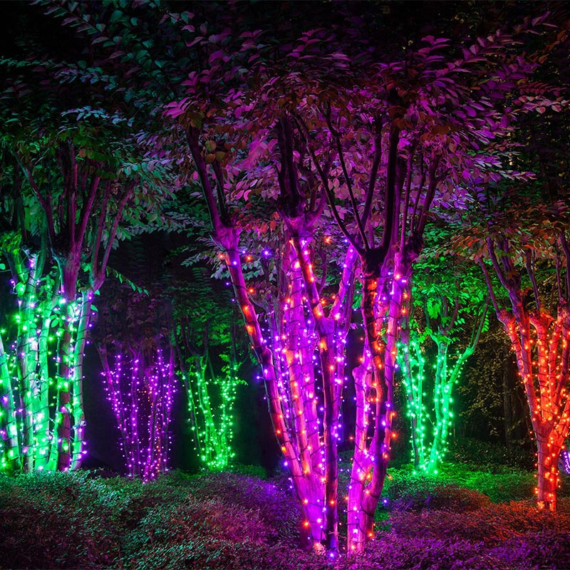 Trees Wrapped with String Lights to Create an Electric Forest on Halloween!