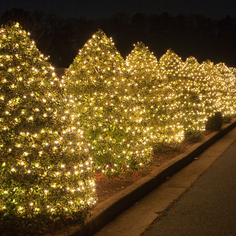 Cone Shaped Bushes Wrapped With String Lights