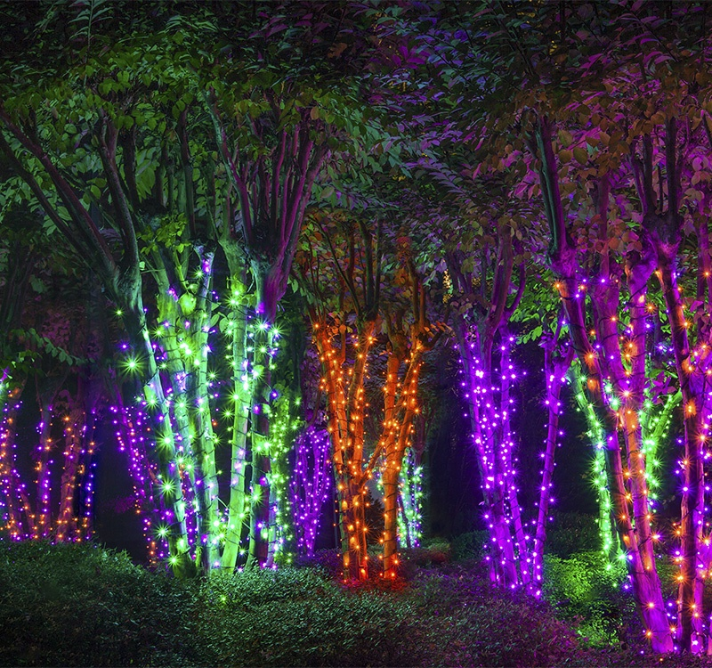 Create an electric forest with Halloween light wrapped trees!