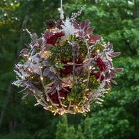 botanical-spheres-sqr-6991.jpg