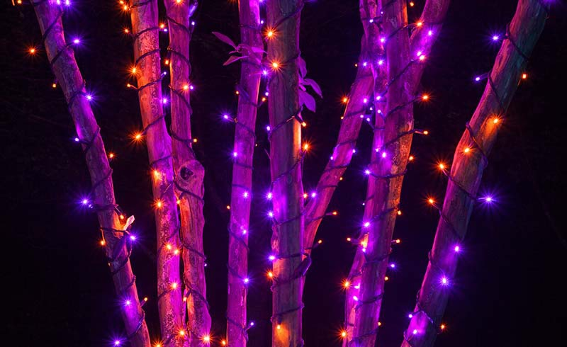 Purple LED Halloween Lights
