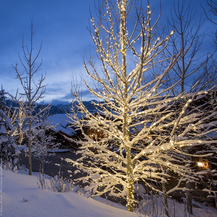 Wrapping Trees With Christmas Lights Tree Wiring Diagram On 3 Wire Wrapped White
