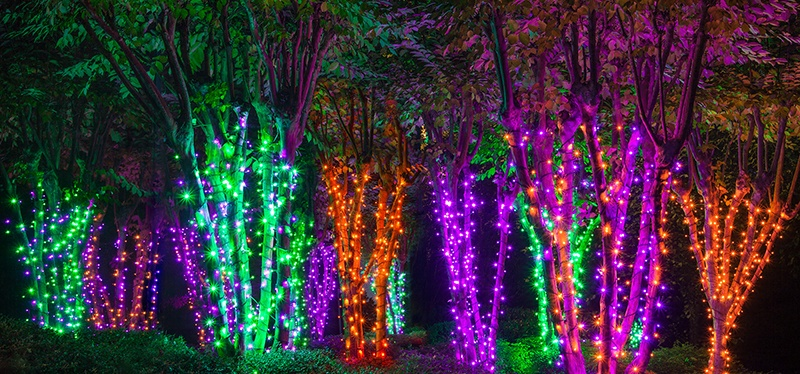 Electric Forest Halloween Lights