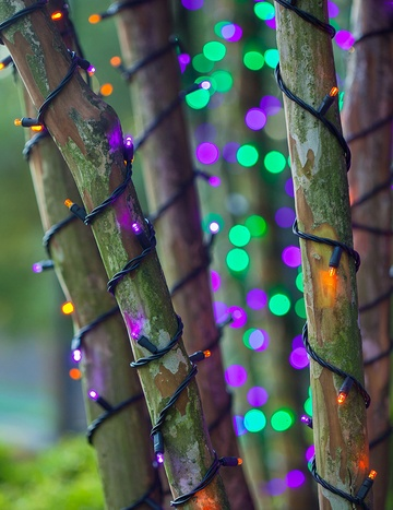 Trees Wrapped in Purple and Orange Lights on Halloween!