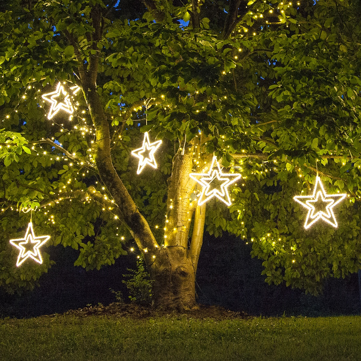 Christmas Stars Hanging from Tree Branches