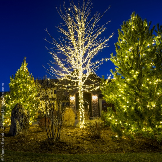 light wrapped outdoor christmas trees
